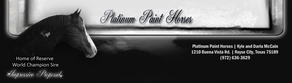 Platinum Paint Horses